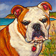 Pet Portrait of Bella the Bulldog from Marna Schindler