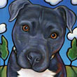 Pet portrait of Carl, beloved Pitbull, by Marna Schindler