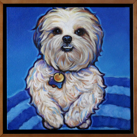 Coco pet portrait