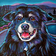 Pet portrait of Corky, from Vernon, British Columbia