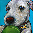 Olover with tennis ball pet portrait, from San Diego