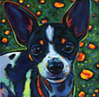 Pet portrait of Pablo, sweet chihuahua/fox terrier mix from San Diego, CA