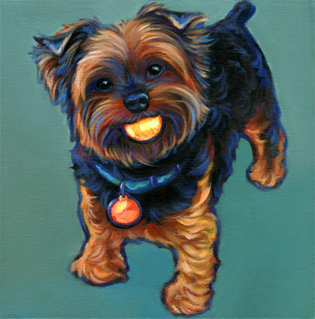 Pepper Yorkie pet portrait
