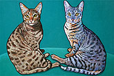 Pet portrait of Quetsy and Schrody, Occicats from San Diego CA