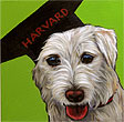 Oliver graduates from Harvard pet portrait, from San Diego